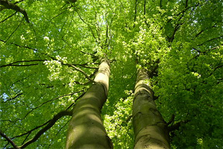 Le bois pour nos escaliers provient de forêts locales